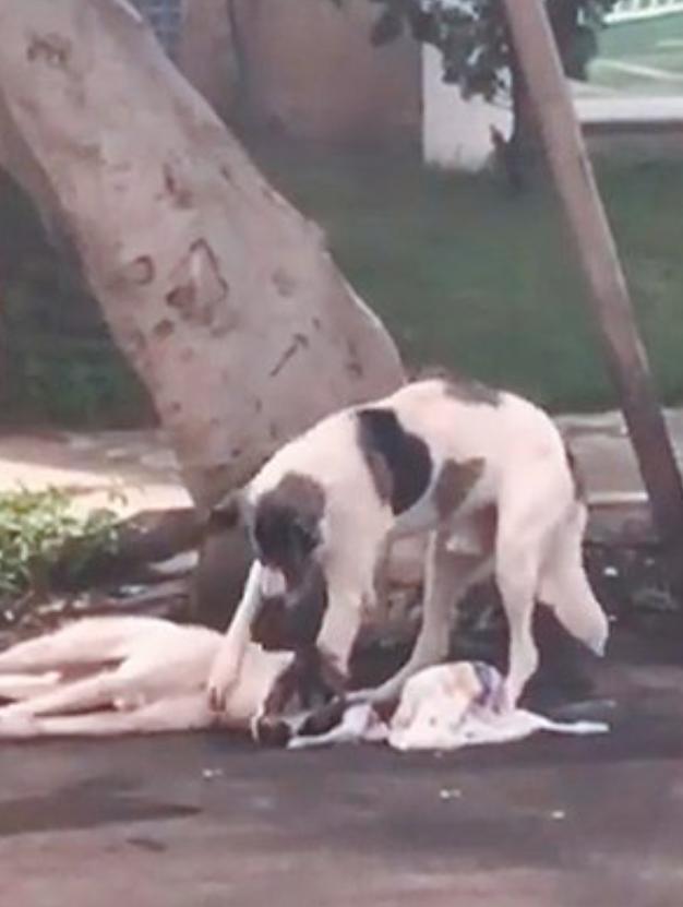 الكلب يبقى بجانب صديقه