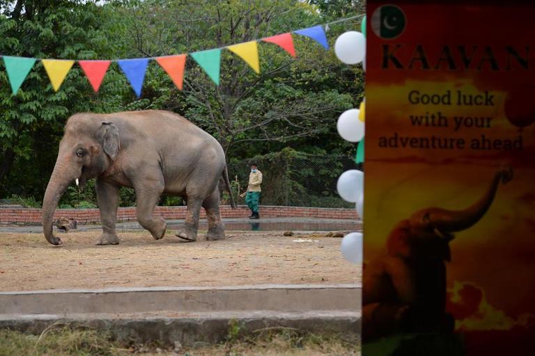 الفيل الاكثر وحدة فى العالم