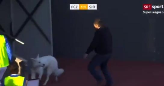 محاولة اخراج الكلب من الملعب