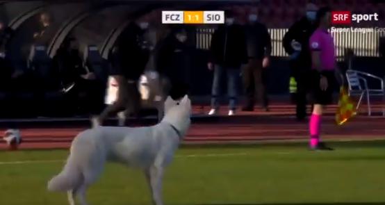 كلب يقتحم الملعب