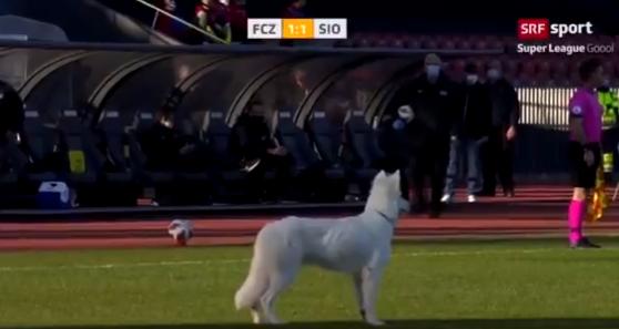 كلب يقف فى نصف الملعب