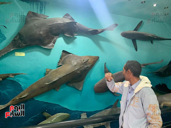 أسرار عالم تحنيط الأسماك بعد نفوقها (9)