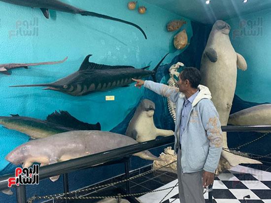 أسرار عالم تحنيط الأسماك بعد نفوقها (10)