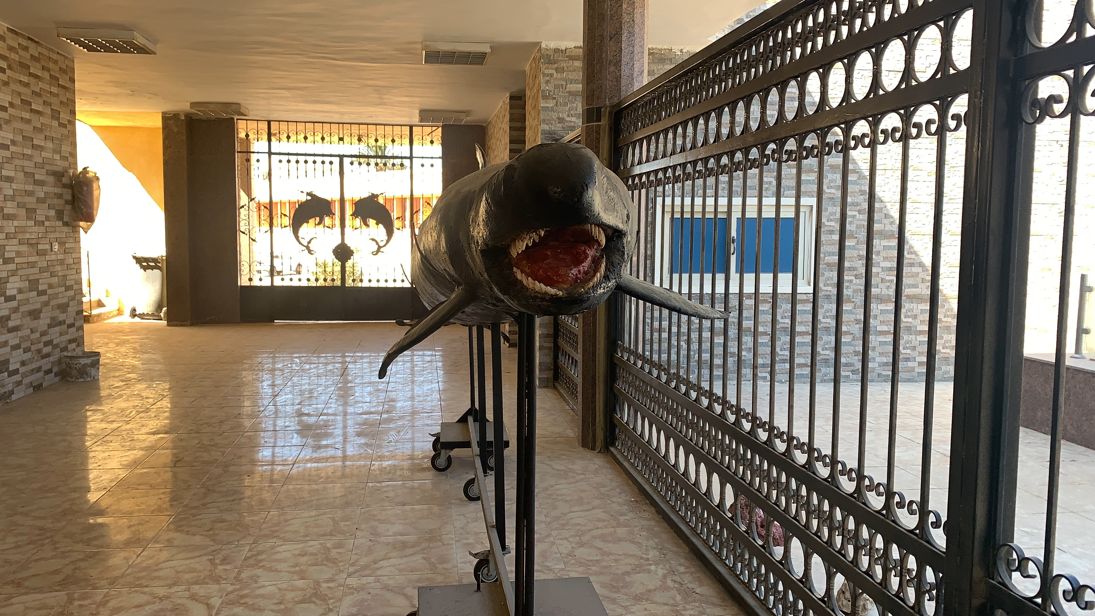 الدولفين القاتل الكاذب بمعهد علوم البحار  (3)