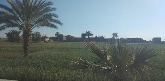 مدخل-القرية-الزراعي