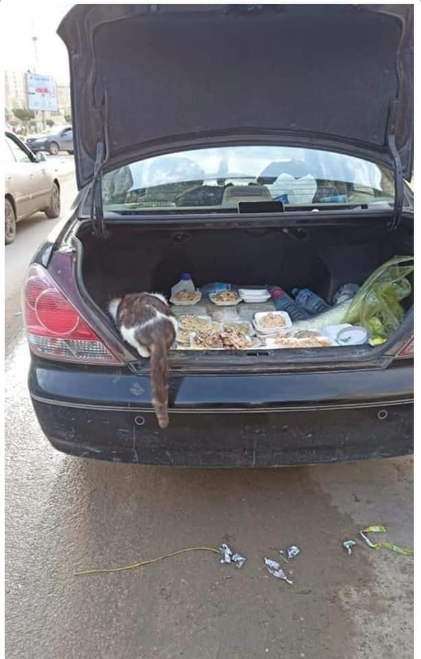 جانب من طعام القطط والكلاب