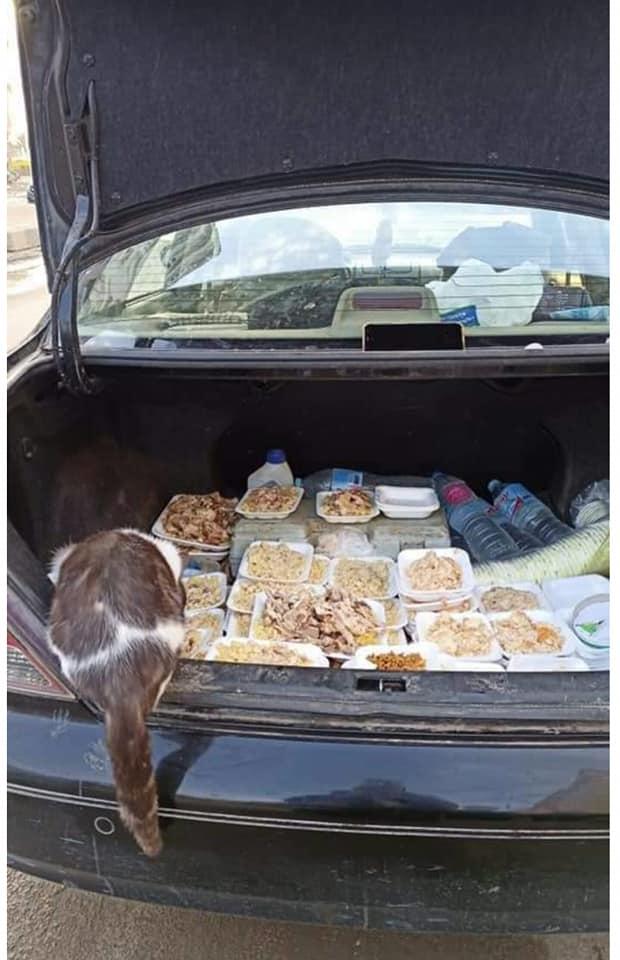 شنطة تحمل طعام للقطط والكلاب