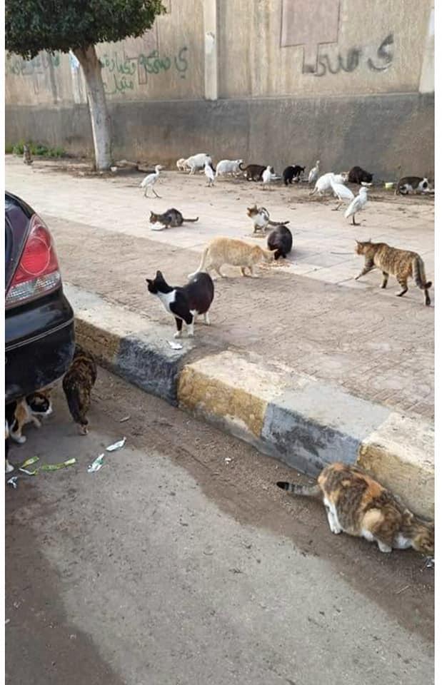 القطط والكلاب ينتظرون طعام رجل وزوجته
