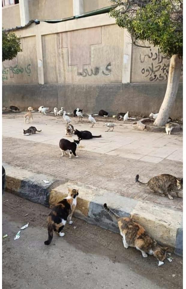 جانب من القطط والكلاب