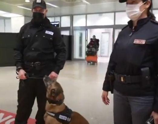 رجال الشرطة مع الكلاب