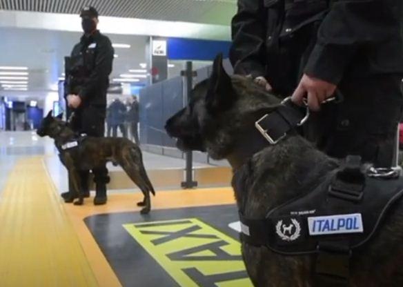 الكلاب المدربة فى رفقة الشرطة