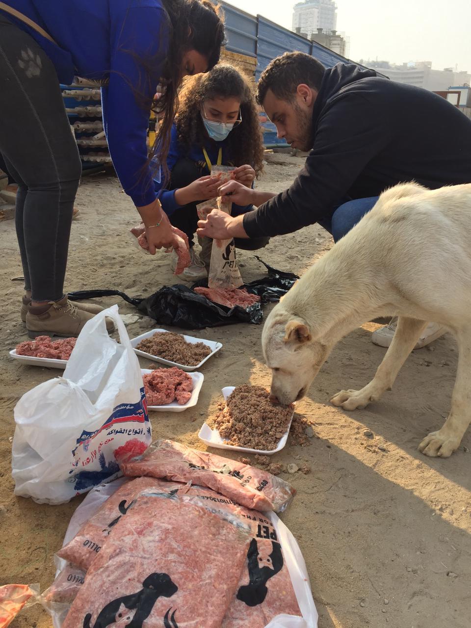 خلال إطعام الكلاب بالشوارع