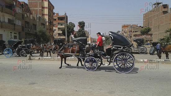 انتعاش الحركة السياحية بإدفو فى أسوان.. والحنطور يتصدر المشهد..  (2)