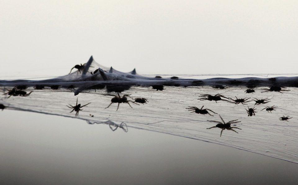 عناكب