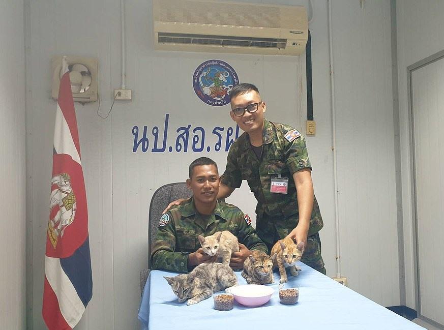 البحرية التايلاندية تنقذ 4 قطط على سفينة نشبت فيها النيران  (2)