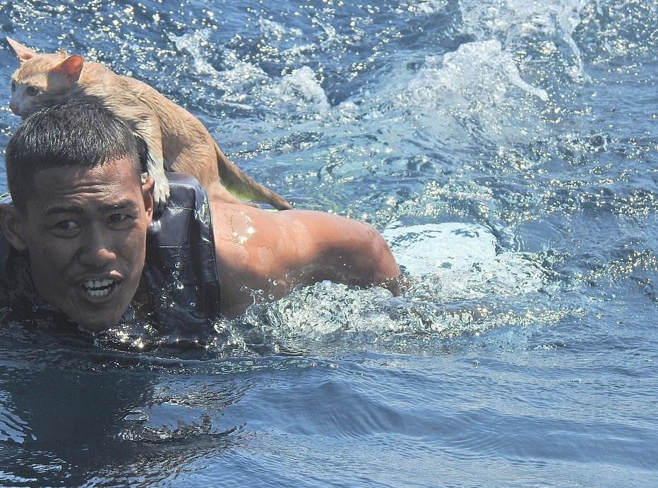 البحرية التايلاندية تنقذ 4 قطط على سفينة نشبت فيها النيران  (3)