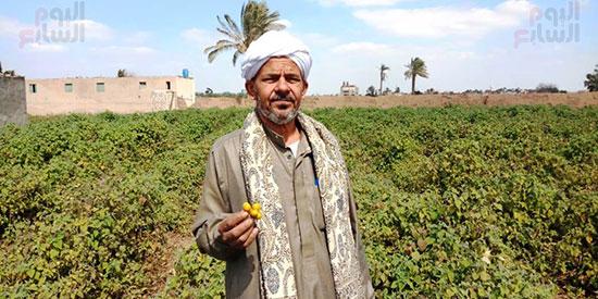 110567-حرنكش-شبين-القناطر