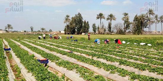 114434-استمرار-أعمال-الحصاد