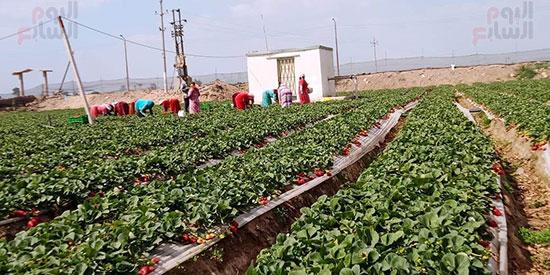 131638-العمالة-بالمزرعة