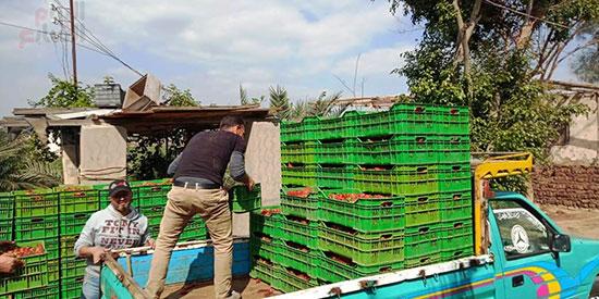 132825-الشباب-خلال-تحمل-السيارات-لبيع-الفراولة
