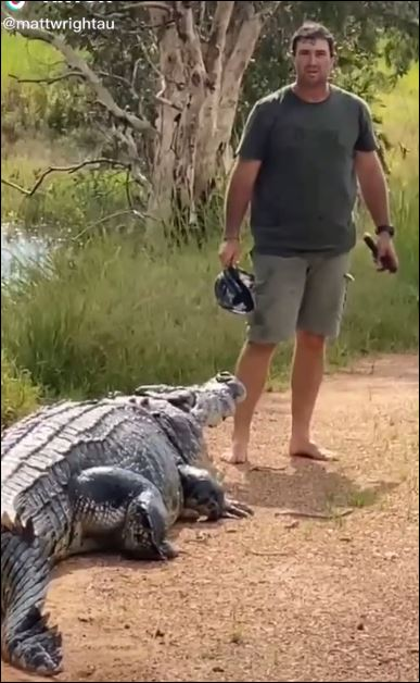 تمساح يستجيب لمذيع أسترالي بالنزول إلى النهر (1)