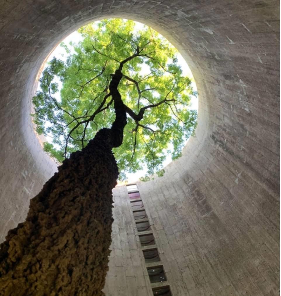 شجرة عملاقة داخل مدخنة
