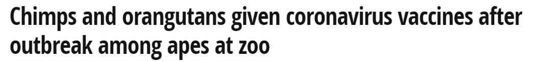 اعطاء الشامبنزى والقرود لقاح كورونا