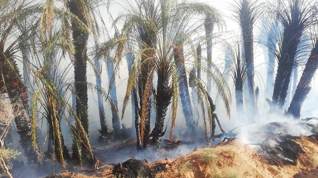 انتشار الحرائق بصورة متكررة فى النخيل بالوادى الجديد  (4)