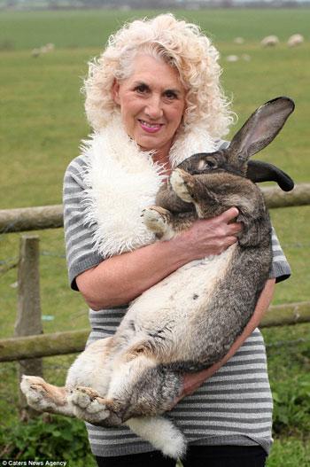 داريوس اطول أرنب فى العالم (2)