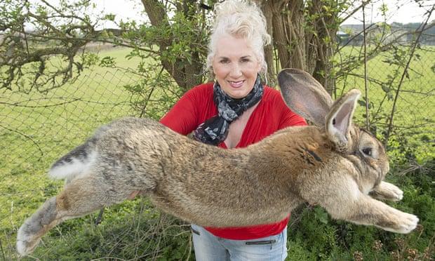 داريوس اطول أرنب فى العالم (1)