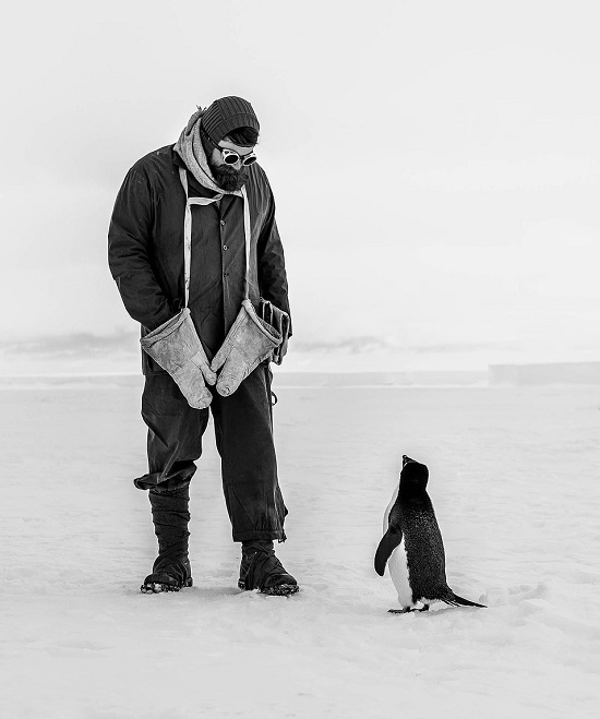 بطريق ينظر بفضول إلى مستكشف قطبي