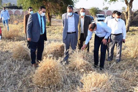 حصاد-القمح-(2)