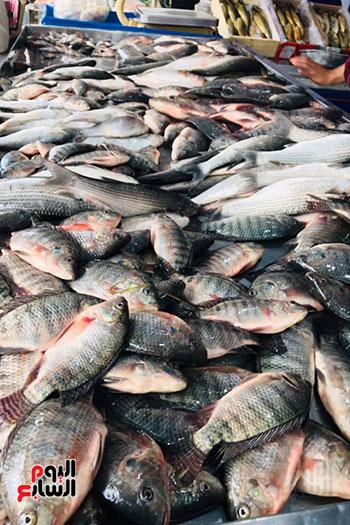 سمك-بلطي-متميز