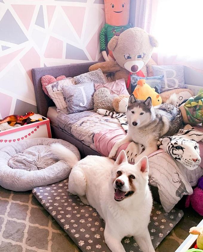 غرفه الكلاب باللون البينك