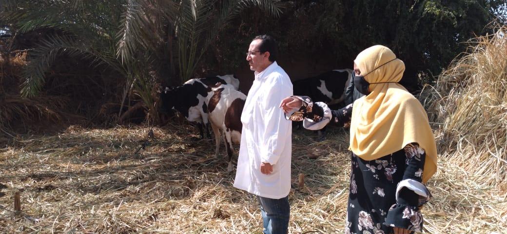 حملات تحصين الماشية والأغنام ضد مرضى الجلد العقدى ومرض جدرى الأغنام