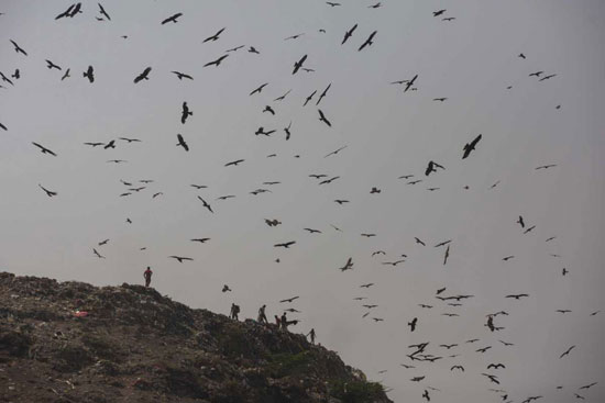 مكب النفايات في ضواحي نيودلهي بالهند