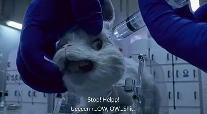 معاناة الأرانب