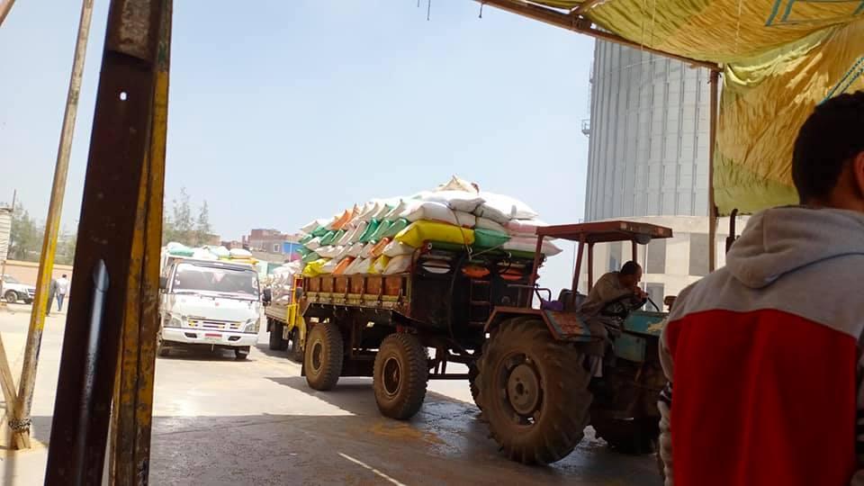 استمرار توريد القمح للمطاحن