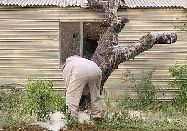 سرب من النحل يهاجم رجلا ويقتله في ولاية تكساس الأمريكية (2)