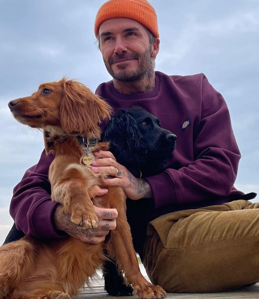 بيكهام وكلابه من نوعيه كوكر