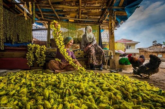 جفيف زهور البامية في توكات
