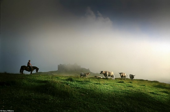 مزارع مع ماشيته ذات القرون الطويلة