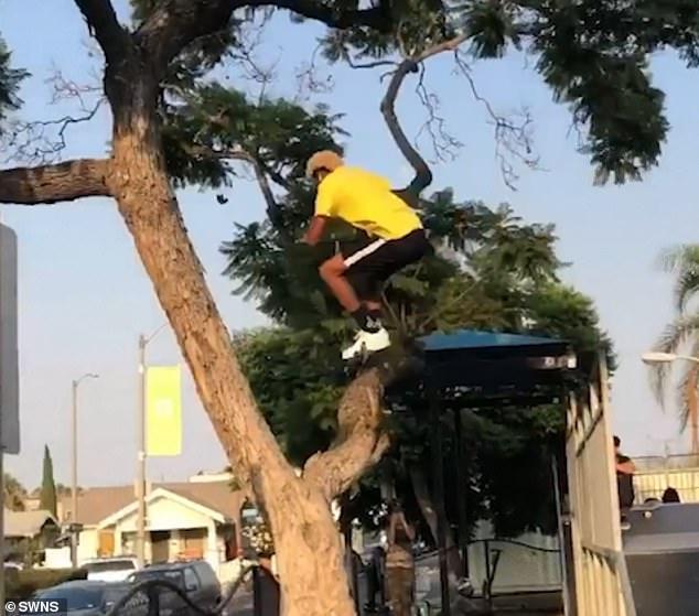لحظة القفز بين الشجرة