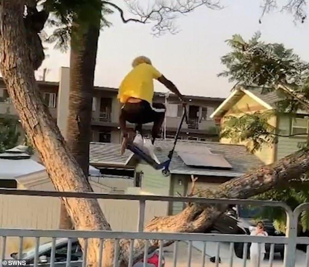 القفز بين الشجرة