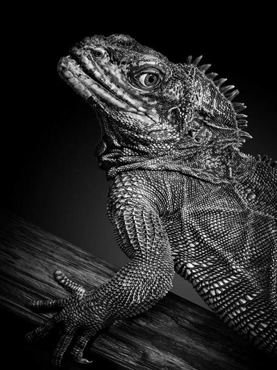 حاول المصور ربط ملامح الحيوانات وتعبيراتهم بالإنسان