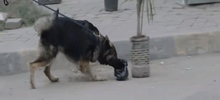 كلب بوليسى للكشف عن العبوة الناسفة