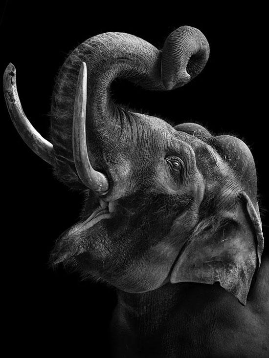 أبطال المشروع حيوانات حديقة موسكو