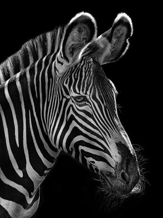 الهدف من المشروع التحذير من انقراض الحيوانات