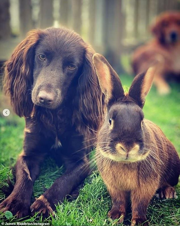 الارنب والكلب