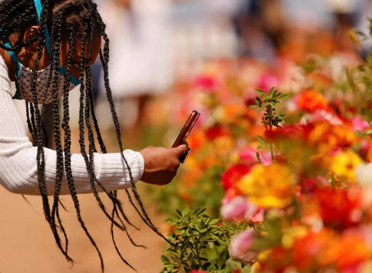 التقاط صورة تذكارية لأحد الزهور